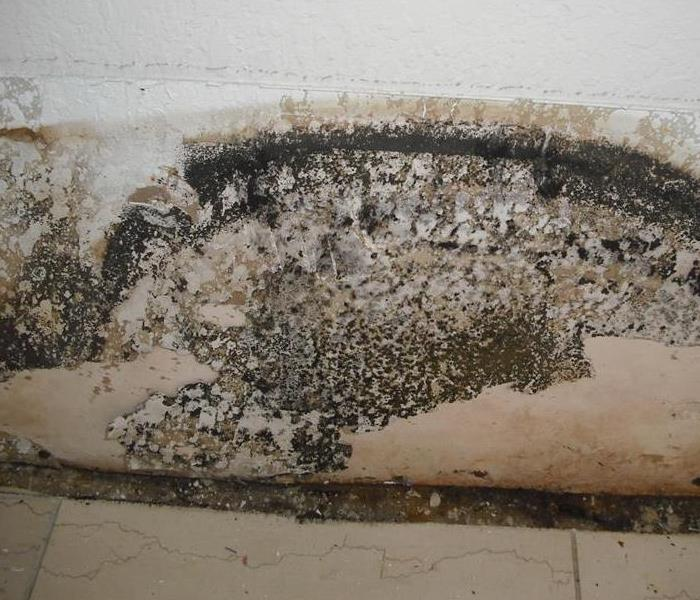Mold Growth on Walls